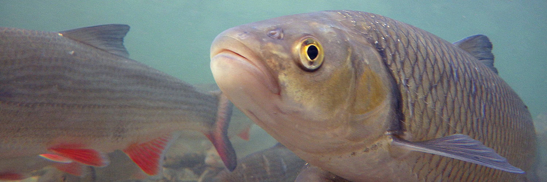 Рыбалка на Билечском озере