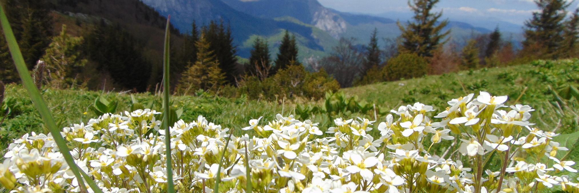 Лучшее время для путешествий по Боснии и Герцеговине