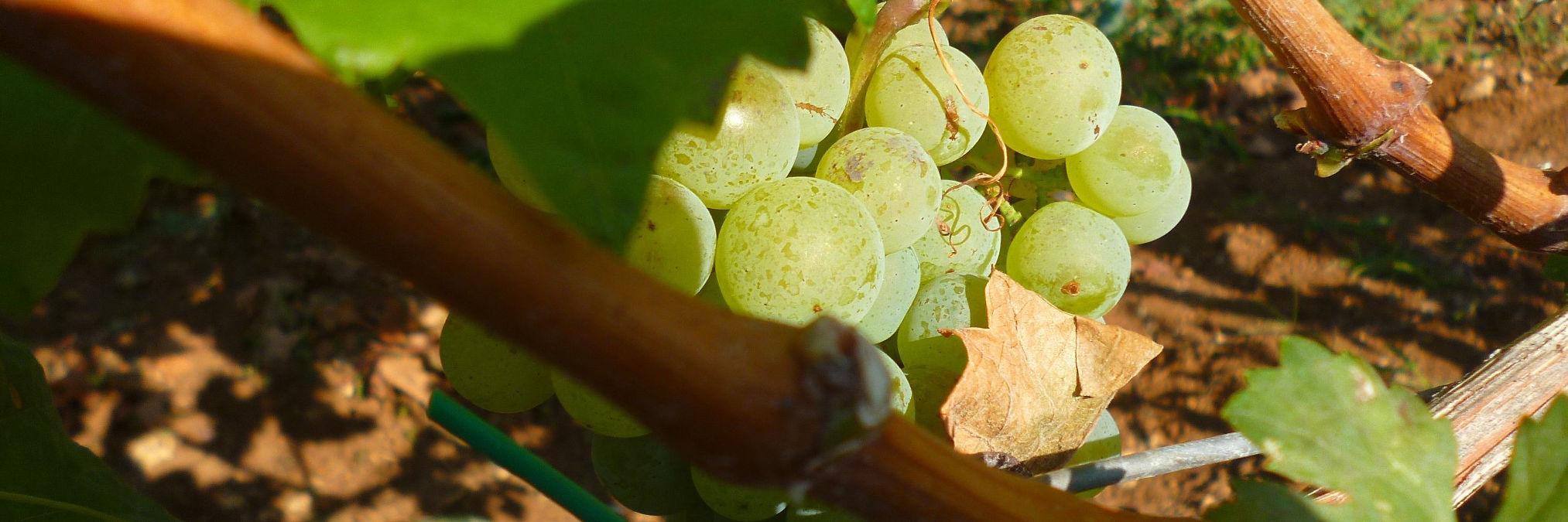 Дегустация вин Герцеговины