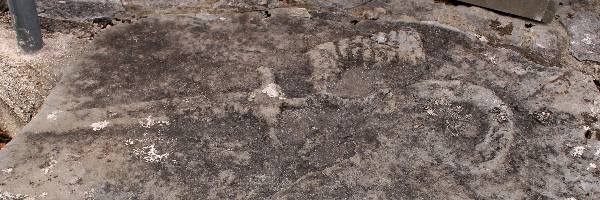 Стечки в Трне